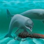 Fogatlan kis bajszos delfin matatott az óceánok fenekén - fotó
