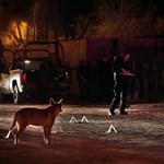 300 kiló kokain, korrupt rendőrök, drogbandák: Juarez  - Nagyítás