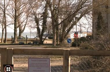 Kivágnak több tucat fát a Balaton partján Keszthelyen