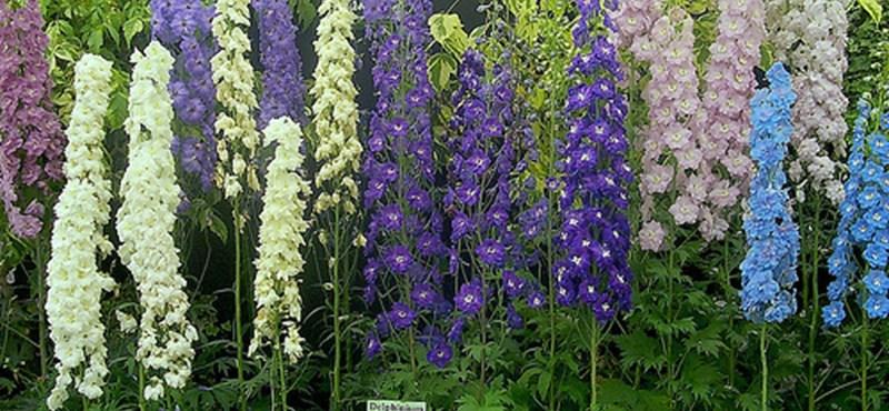 Praktikus és gyönyörű: a növényhenger