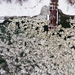 Leállt az egyik tiszai komp, 40-70 kilométert kell miatta autókázni