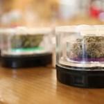 Legalizálják a marihuánát az ausztrál fővárosban