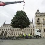 Az EU csak a földlabdás karácsonyfákat támogatná, de a magyar kormány közbelép