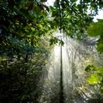 Gyorsabban nőnek a fák, de rosszabb a minőségük a globális felmelegedés miatt