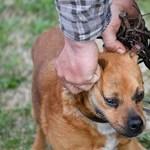 Focidrukkerek mennek tüntetni Nagycserkeszre a megkínzott kutya miatt