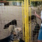 Menhelyviadal az ócsai kutyákért – Galéria