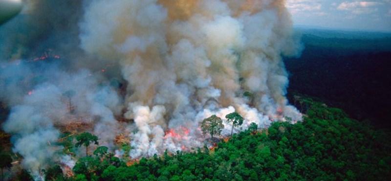 Kósa: Nem is ég az őserdő