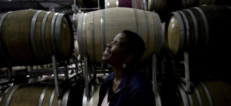 Egy fekete nő törheti meg a fehér férfi borászok egyeduralmát Dél-Afrikában