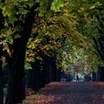 Kirúgták több fővárosi temető vezetőjét