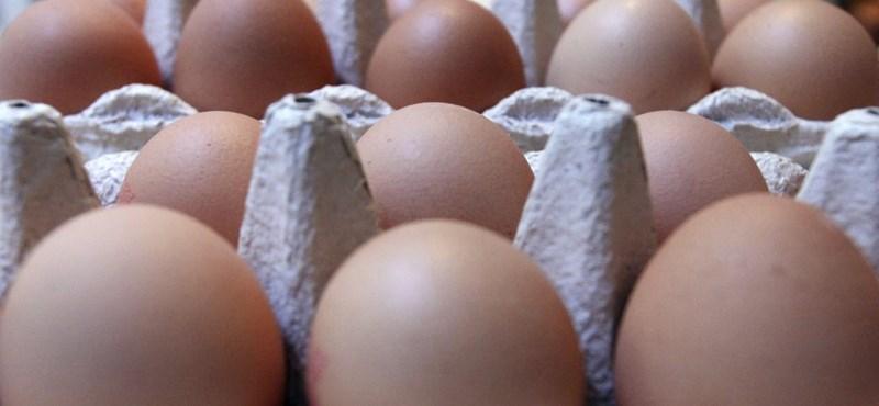KSH: drasztikus a tojásár növekedése