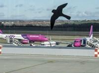 Még egyszer elnézést kért a Wizz Air, miután a kormányhivatal milliókra büntette