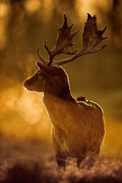 NE_! - VI. Az állatok szemtől szemben - 1. díj és a Nimród Vadászújság különdíja - Arany bika - Az Év Természetfotója 2014, nagyítás