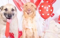 Valentin a menhelyen: megható fotókkal keresnek gazdit kutyapároknak