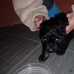 Az utasok szeme láttára dobtak le egy kiskutyát a villamosról