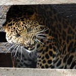 Fotók: izgalmas állatok érkeztek Szegedre