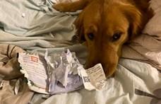 A kutya megette az útlevelem - így nem utazott egy nő a koronavírus-fertőzés helyére