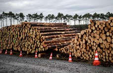 Kivágatna egy erdőt a Tesla, a német bíróság most leállíttatta