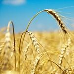 Klímakutató is legyen, aki gabonapiacon spekulál!
