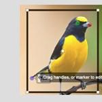 Ez a weboldal fotókról azonosítja a madarakat
