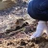 Száznál is több agyonvert kutya teteme került elő Hajdúsámson mellett