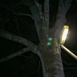 Lázár felhívására megmutatjuk, hogy működik a közvilágítás Hódmezővásárhelyen