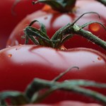 92 kilónyi zöldséget szüreteltek a Német Űrközpont antarktiszi üvegházában