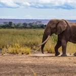 Elefántvadászati engedélyeket árvereztek el Botswanában