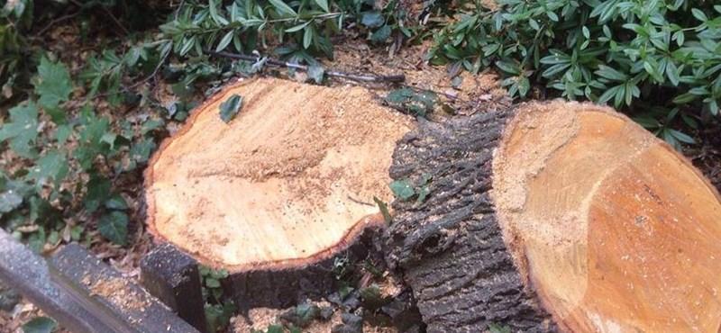 Újra fegyvert kapnak a román erdészek