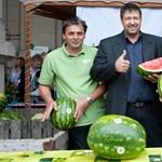 Már exportálják a magyar dinnyét
