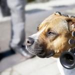 Nem érti, mit ugat a kutyája? Ez a headset lefordítja