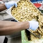 Egyre több ételt dobnak ki a kiszállításra dolgozó brit éttermek a járvány miatt