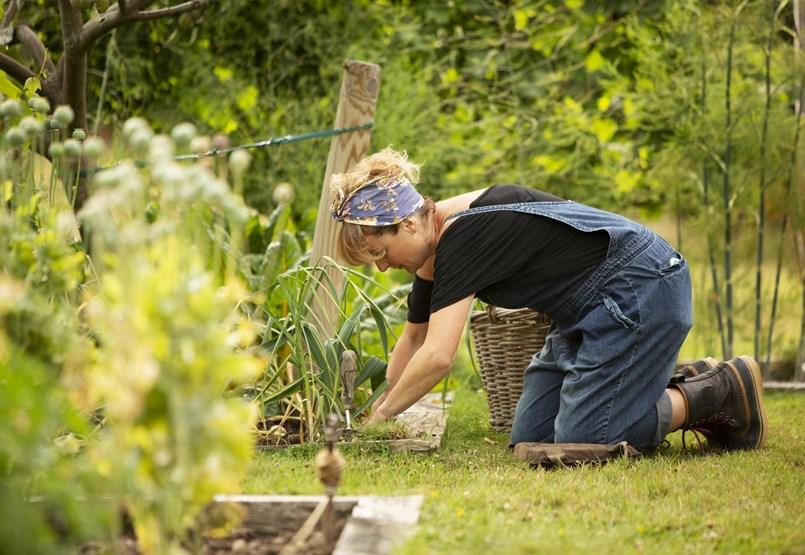 ¿Cómo puede luchar contra las plagas del jardín si evita los productos químicos?