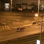 Szökevény pónik randalíroztak Budapest utcáin - videó