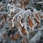 5+1 gondolat, ami a végzős diákok eszébe jut télen
