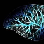 Magyar kutatók megtalálták az agyban a stressz és az álmatlanság kulcsát