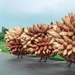 Videó: erre használják Afrikában a magyar bicajokat