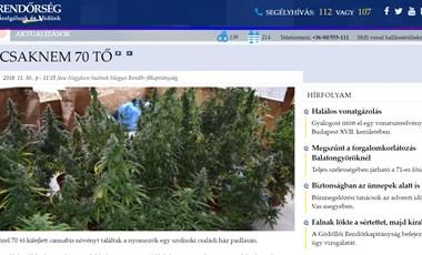 Kannabisz vagy karácsonyfa? Az itt a kérdés