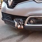 Nem vette észre egy autós, hogy egy kutya szorult a hűtőrácsába