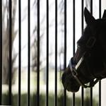 Ráférne némi fogyókúra a brit lovakra