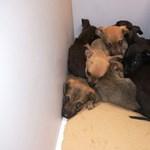 Valakinek volt szíve zsákban kidobni ezeket a kiskutyákat – fotó
