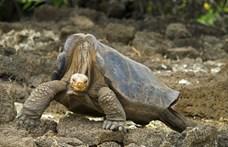 A tudósok elindulnak megkeresni a kihalt galápagosi óriásteknős rokonait