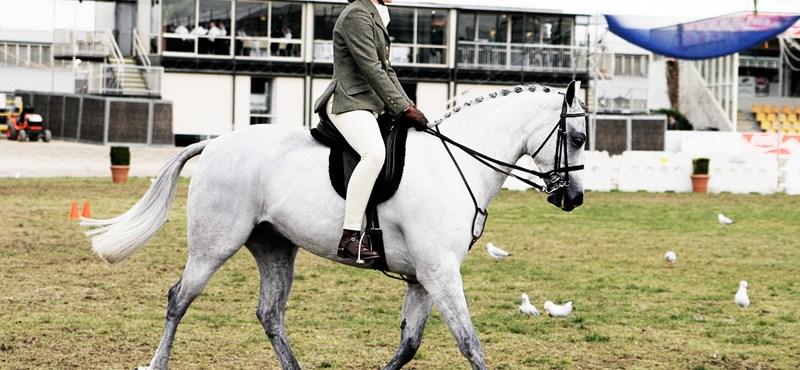 Új tantárgy jön szeptembertől: három évfolyamon bevezetik a lovasoktatást