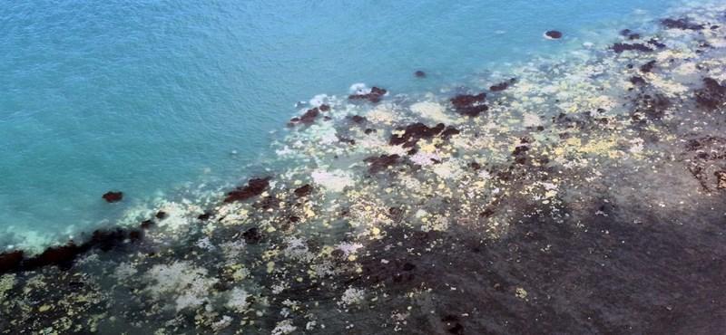 """Öt """"halálközeli élménye"""" is volt a Nagy-korallzátonynak, de amit most teszünk vele, azt lehet, hogy már nem éli túl"""