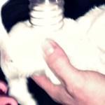Porszívóval mentettek ki a kútból egy kéthetes kölyökkutyát