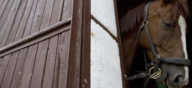 Lezuhant egy ló a budai Várból