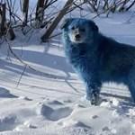 Kék kutyákat találtak egy elhagyatott orosz vegyi üzem közelében