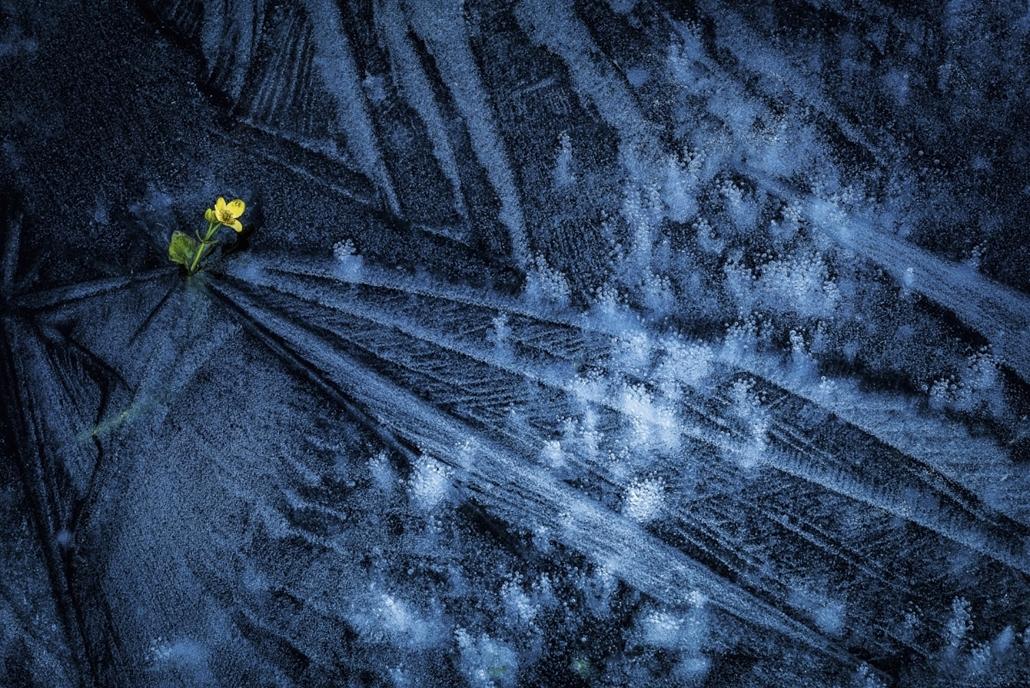 NE HASZNÁLD! - canon év természetfotósa, természetfotó, VII. Növények és gombák, 1. díj - Fagyos tavasz