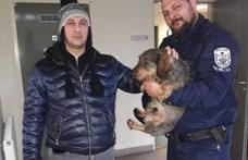 Szökött tacskót mentettek ki a Tiszából a rendőrök