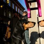 Szagmunkásvizsga: Nem csak az orrával old meg feladatokat a kutya