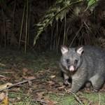 Rosszabb hatással lehetnek a túrázók az állatok élőhelyeire, mint a fakivágás